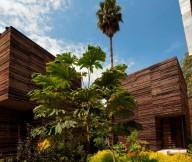 Beautiful Plants Flat Roof Wooden Wall Palm Tree