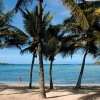 Exotic Getaway Resort coconut trees Beach-View Caribbean Sea