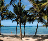 Exotic Getaway Resort coconut trees Beach-View Caribbean Sea