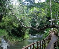 Frangipani Trees Natural Stone Wooden Rails Beautiful View