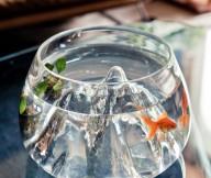 Glass Aquarium Orange Fish Brown SofaGlass Table