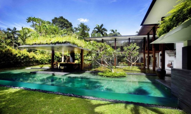 Infinity Pool Frangipani Trees Green Lawn Beautiful Sense