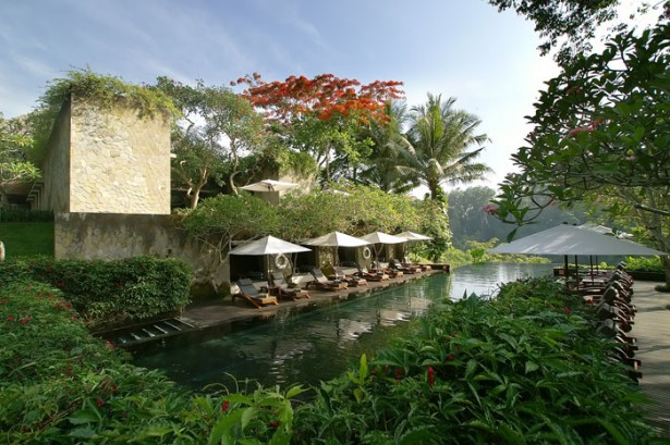 Beautiful Tropical Paradise Traditional Pool Green View