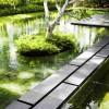 Garden Pool Big Tree Serene Sun House Ideas